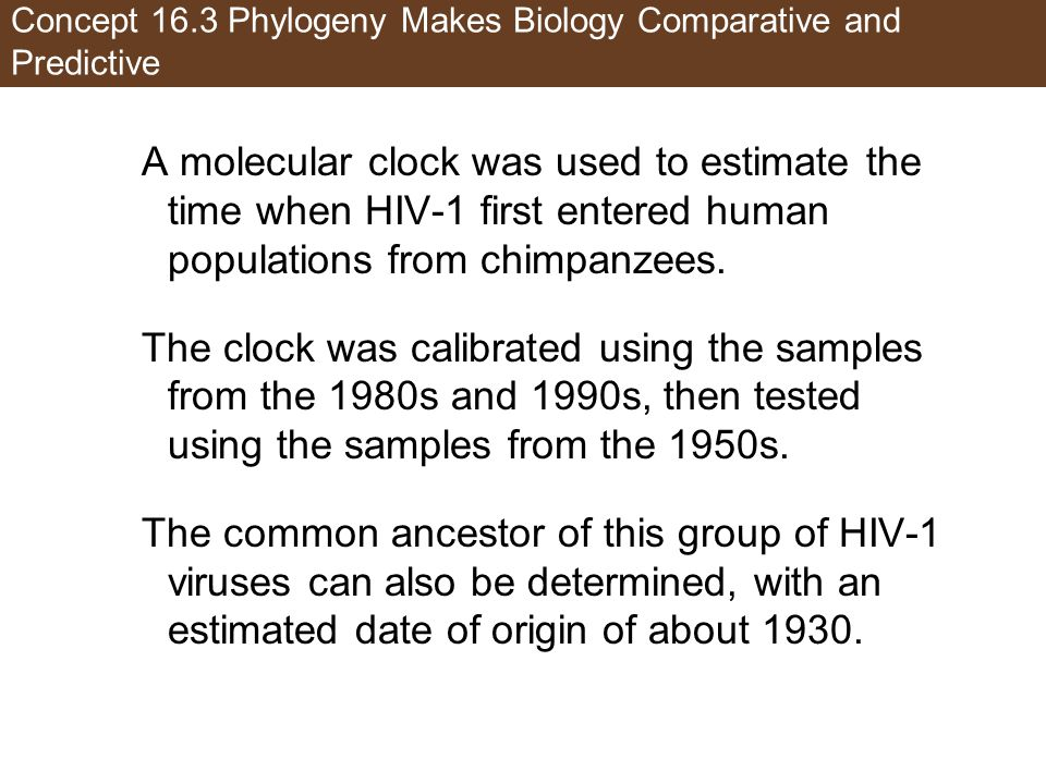 Concept 16.3 Phylogeny Makes Biology Comparative and Predictive A molecular clock was used to estimate the time when HIV-1 first entered human populations from chimpanzees.