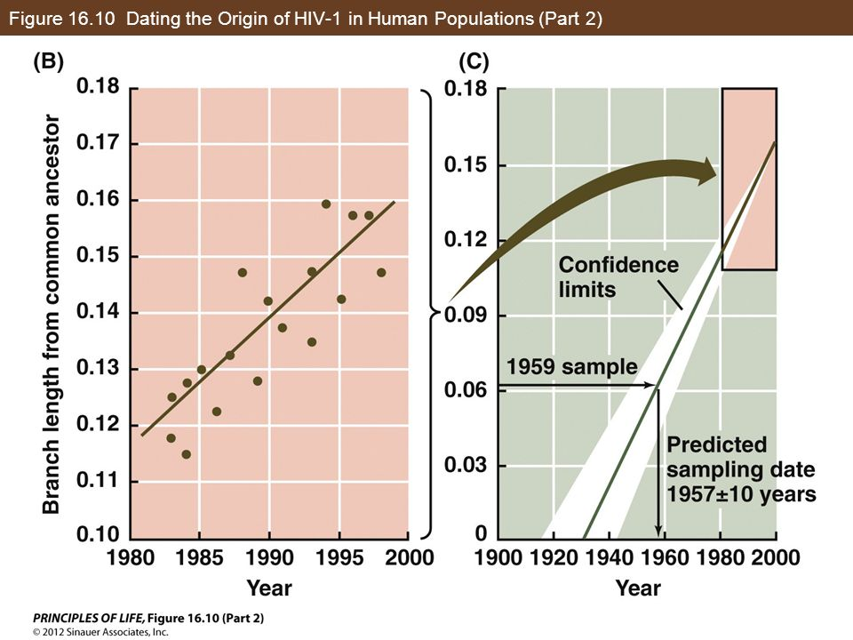 Figure 16.10 Dating the Origin of HIV-1 in Human Populations (Part 2)