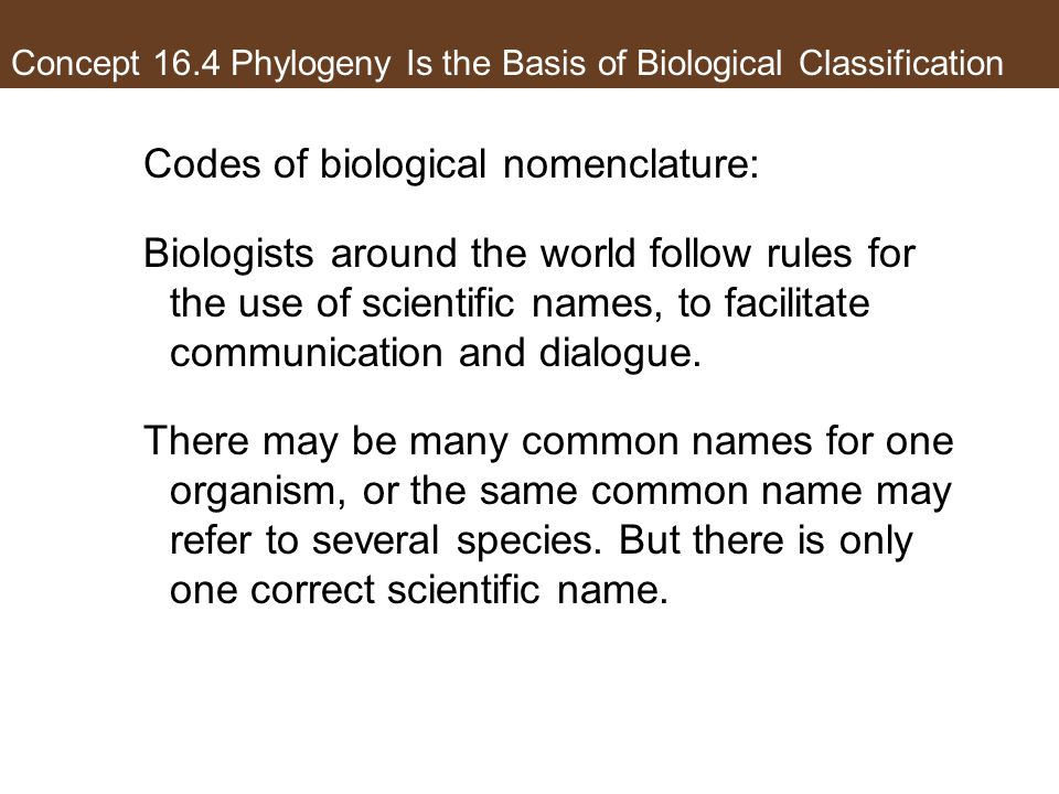 Concept 16.4 Phylogeny Is the Basis of Biological Classification Codes of biological nomenclature: Biologists around the world follow rules for the use of scientific names, to facilitate communication and dialogue.
