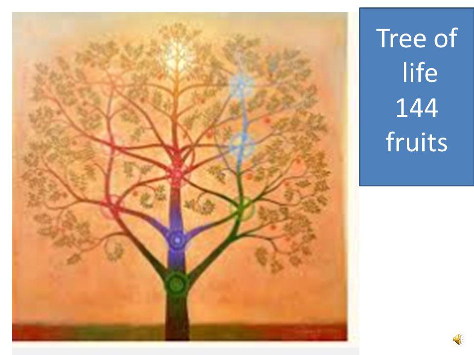 Tree of life 144 fruits