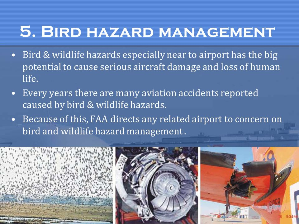 5. Bird hazard management Bird & wildlife hazards especially near to airport has the big potential to cause serious aircraft damage and loss of human