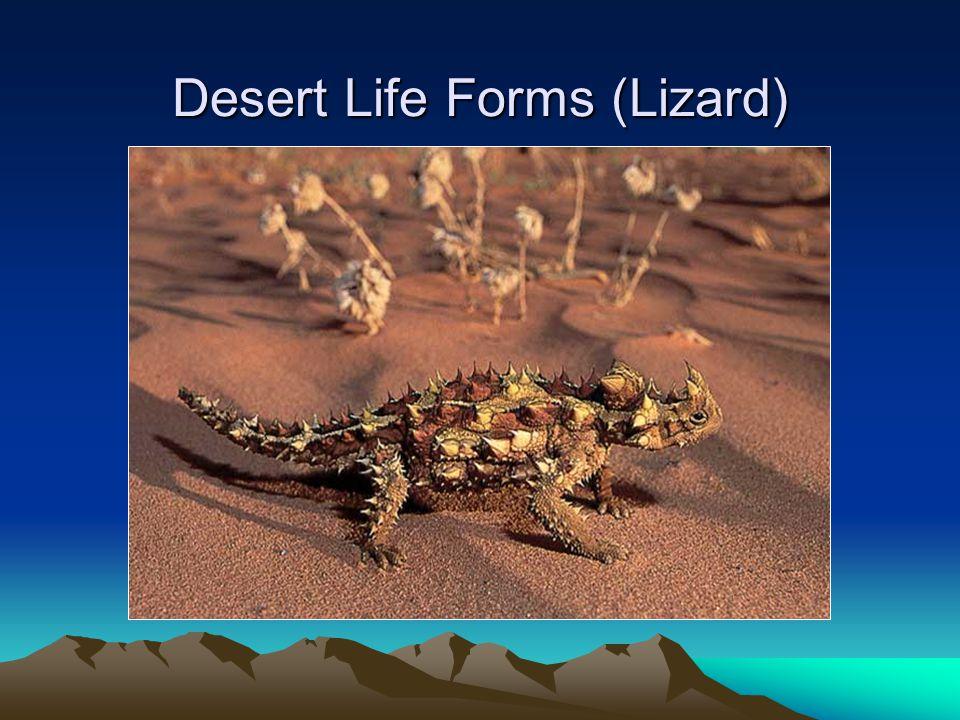 Desert Life Forms (Lizard)