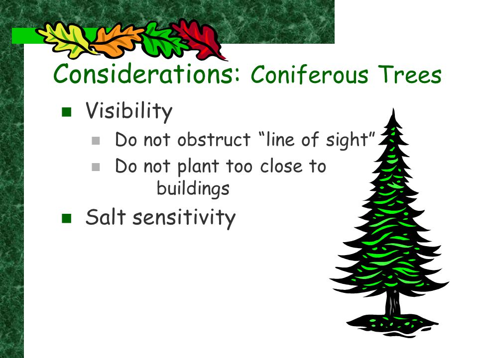 "Considerations: Coniferous Trees Visibility Do not obstruct ""line of sight"" Do not plant too close to buildings Salt sensitivity"