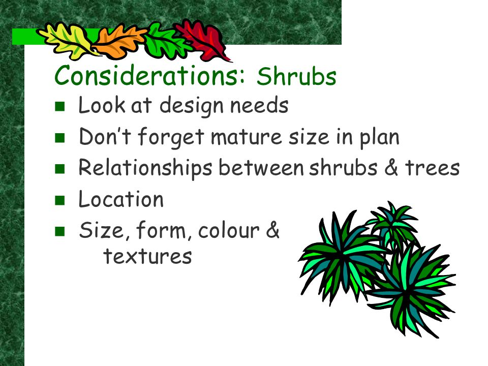 Considerations: Shrubs Look at design needs Don't forget mature size in plan Relationships between shrubs & trees Location Size, form, colour & textur