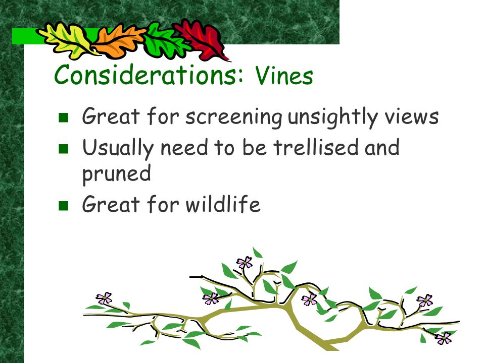 Considerations: Vines Great for screening unsightly views Usually need to be trellised and pruned Great for wildlife