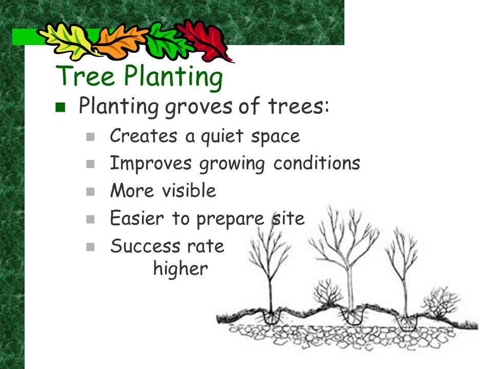Tree Planting Planting groves of trees: Creates a quiet space Improves growing conditions More visible Easier to prepare site Success rate higher