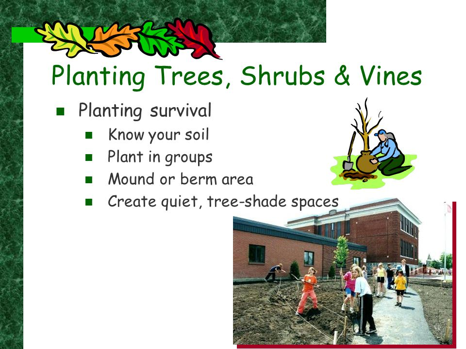 Planting Trees, Shrubs & Vines Planting survival Know your soil Plant in groups Mound or berm area Create quiet, tree-shade spaces