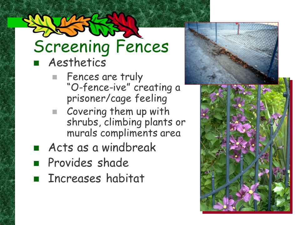 "Screening Fences Aesthetics Fences are truly ""O-fence-ive"" creating a prisoner/cage feeling Covering them up with shrubs, climbing plants or murals co"