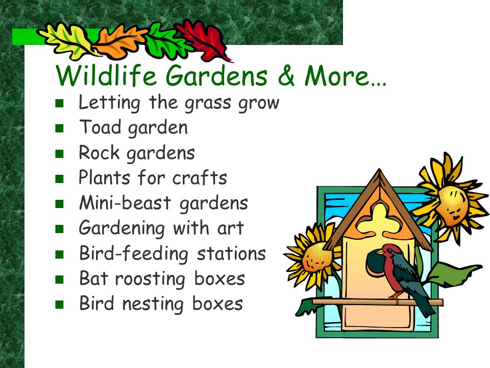 Wildlife Gardens & More… Letting the grass grow Toad garden Rock gardens Plants for crafts Mini-beast gardens Gardening with art Bird-feeding stations