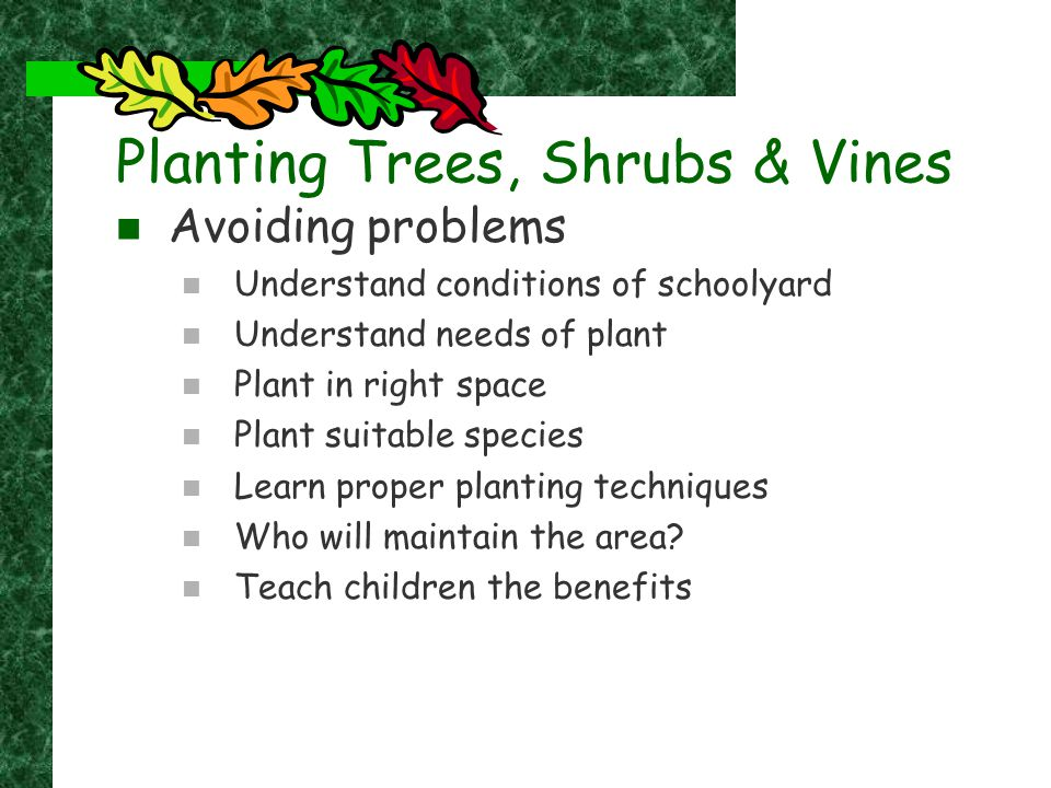 Protecting trees & plants Make groves or mounded areas Plant larger trees (45-65mm or more) Conifers need help and considerations Water … water … water Snow … it's effects Planting Trees, Shrubs & Vines