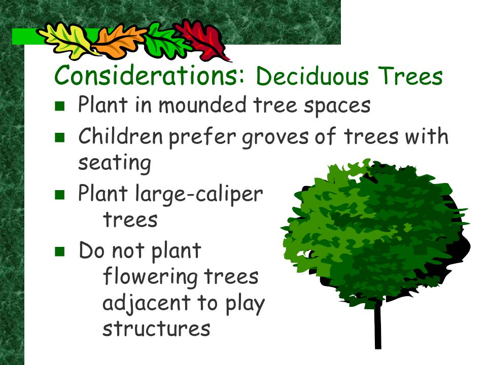 Considerations: Deciduous Trees Plant in mounded tree spaces Children prefer groves of trees with seating Plant large-caliper trees Do not plant flowe
