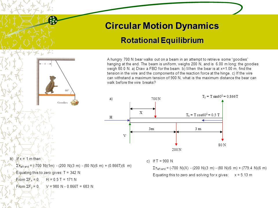 "Circular Motion Dynamics Rotational Equilibrium A hungry 700 N bear walks out on a beam in an attempt to retrieve some ""goodies"" hanging at the end. T"
