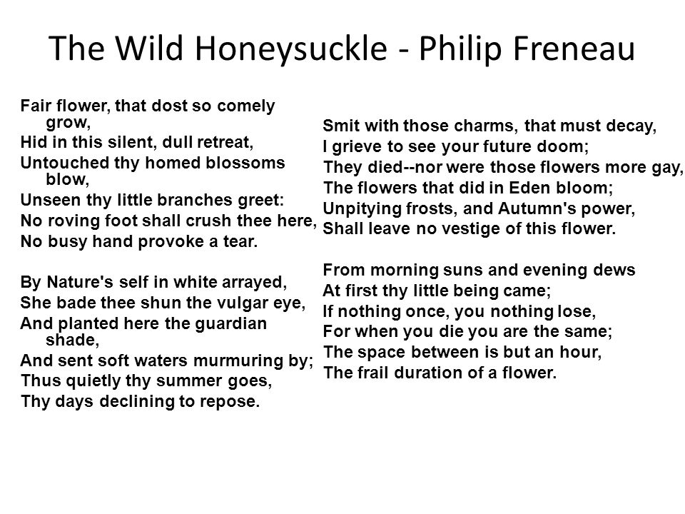 The Wild Honeysuckle - Philip Freneau Fair flower, that dost so comely grow, Hid in this silent, dull retreat, Untouched thy homed blossoms blow, Unseen thy little branches greet: No roving foot shall crush thee here, No busy hand provoke a tear.