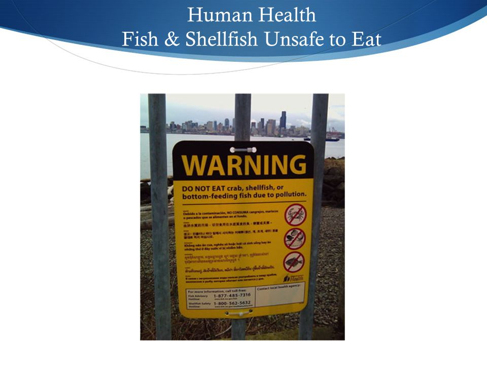 Human Health Fish & Shellfish Unsafe to Eat