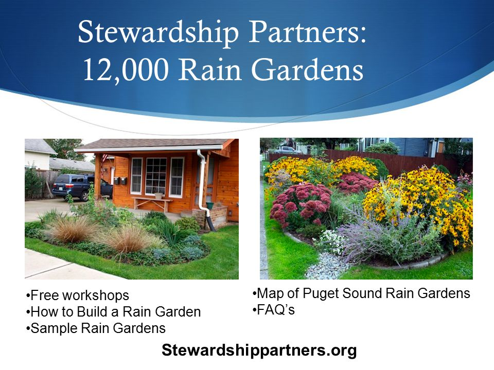 Free workshops How to Build a Rain Garden Sample Rain Gardens Stewardship Partners: 12,000 Rain Gardens Map of Puget Sound Rain Gardens FAQ's Stewardshippartners.org