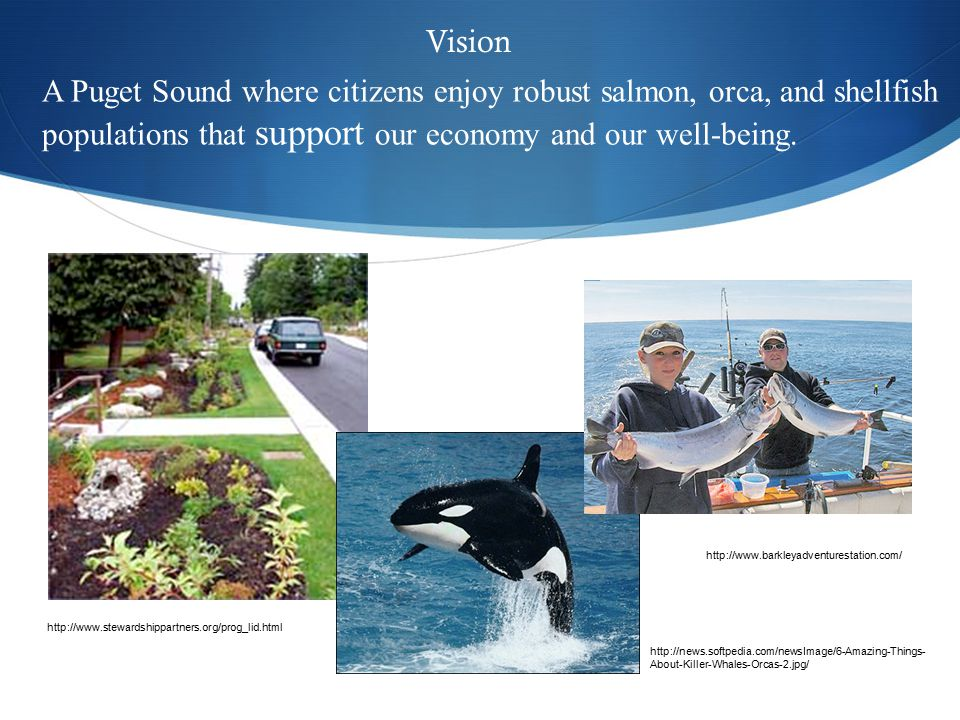 A Puget Sound where citizens enjoy robust salmon, orca, and shellfish populations that support our economy and our well-being.