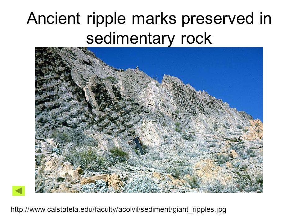 Ancient ripple marks preserved in sedimentary rock http://www.calstatela.edu/faculty/acolvil/sediment/giant_ripples.jpg