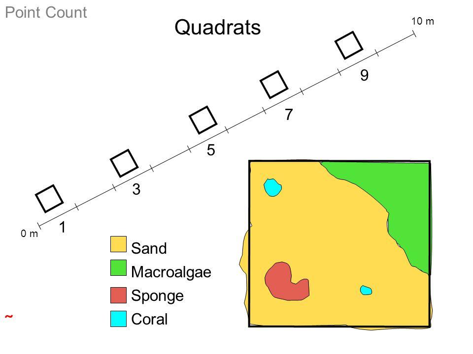 0 m 10 m 1 3 5 7 9 Sand Macroalgae Sponge Coral Point Count Quadrats 