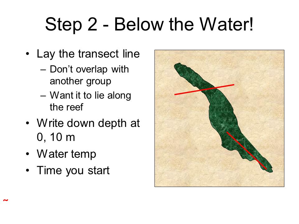 Step 2 - Below the Water! Lay the transect line –Don't overlap with another group –Want it to lie along the reef Write down depth at 0, 10 m Water tem