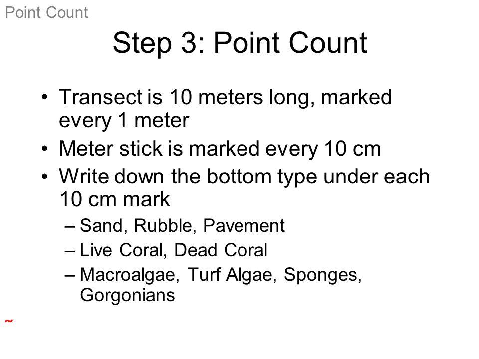 0 m 10 m Sand Macroalgae Rubble Sponge 2 m 3 m Point Count 