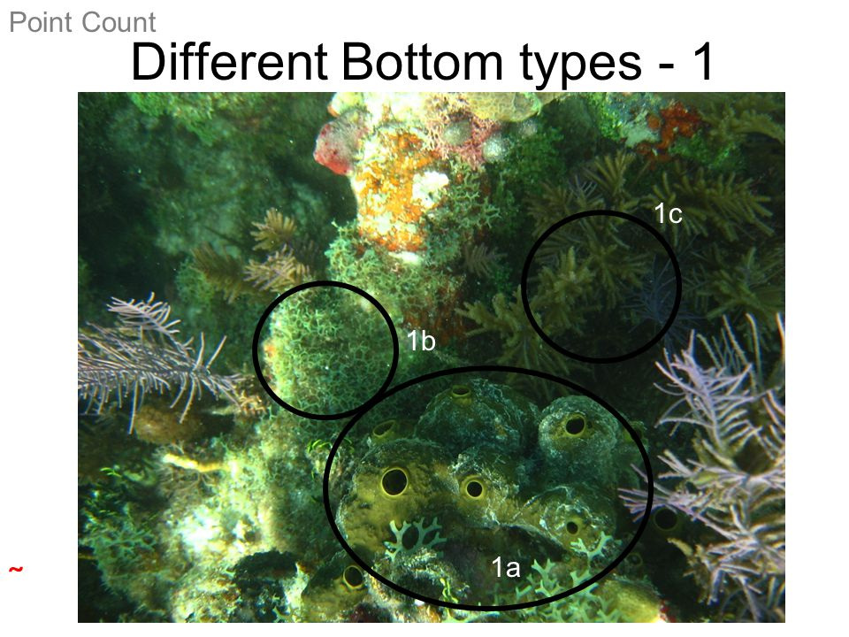 Different Bottom types - 2 Point Count  2a 2b 2c