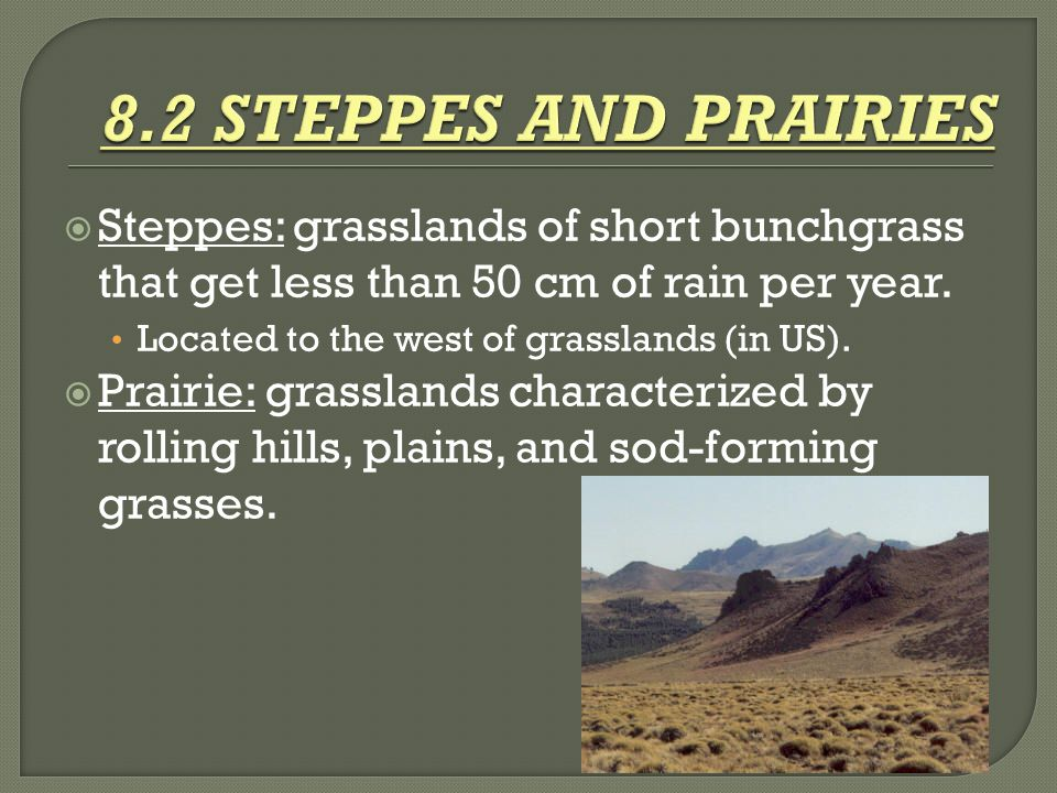  Steppes: grasslands of short bunchgrass that get less than 50 cm of rain per year. Located to the west of grasslands (in US).  Prairie: grasslands