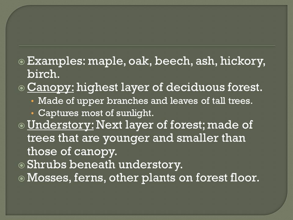  Examples: maple, oak, beech, ash, hickory, birch.  Canopy: highest layer of deciduous forest. Made of upper branches and leaves of tall trees. Capt