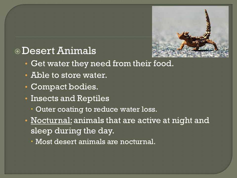  Desert Animals Get water they need from their food. Able to store water. Compact bodies. Insects and Reptiles  Outer coating to reduce water loss.
