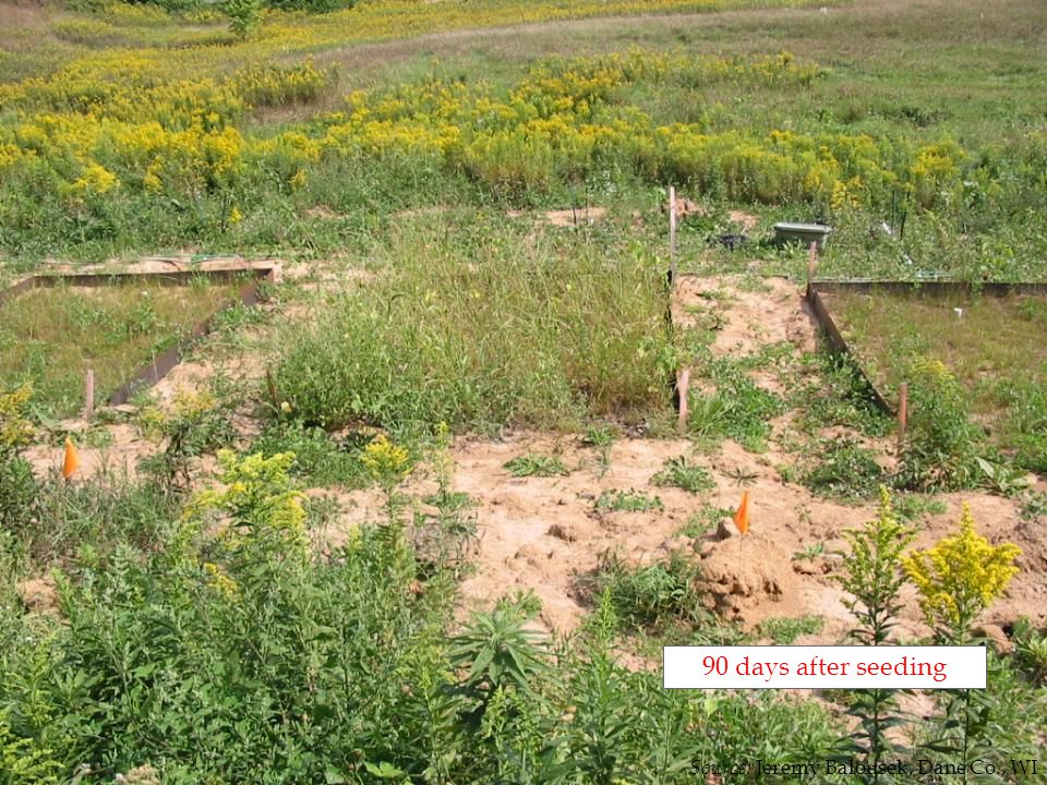 90 days after seeding Source: Jeremy Balousek, Dane Co., WI