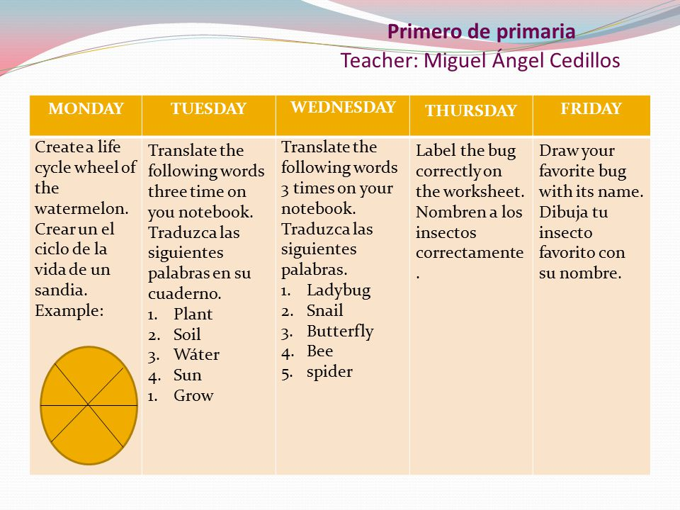 Primero de primaria Teacher: Miguel Ángel Cedillos MONDAYTUESDAY WEDNESDAY THURSDAY FRIDAY Create a life cycle wheel of the watermelon.