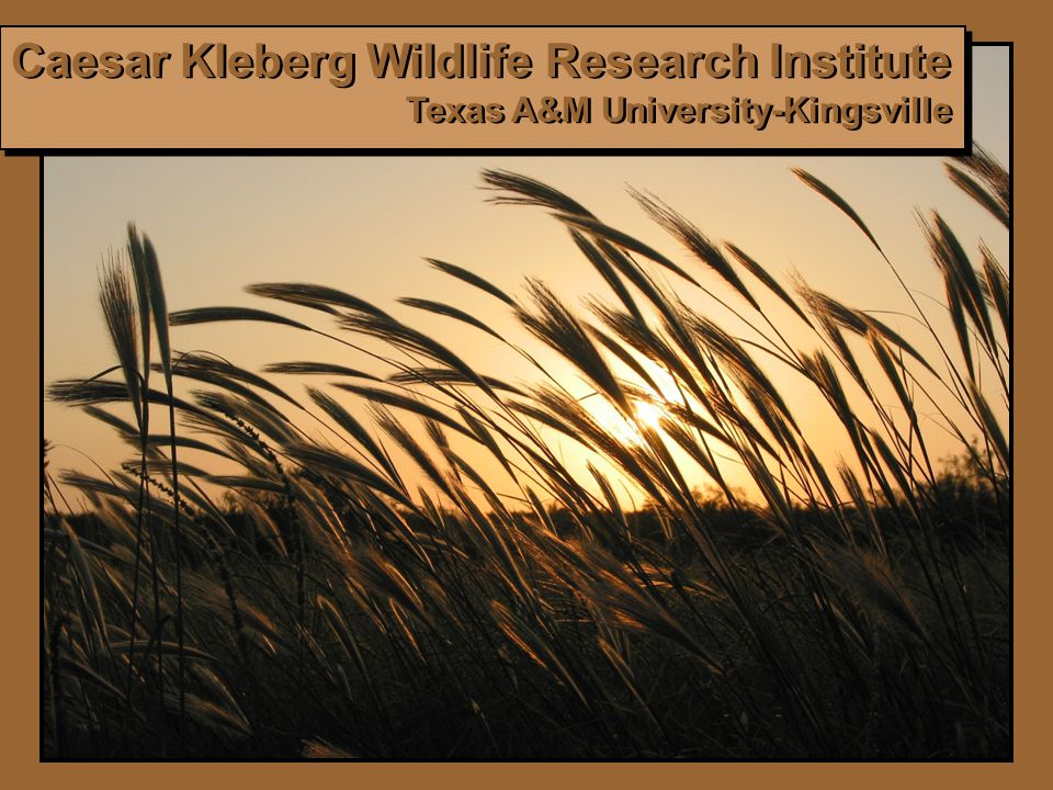 Caesar Kleberg Wildlife Research Institute Texas A&M University-Kingsville Caesar Kleberg Wildlife Research Institute Texas A&M University-Kingsville