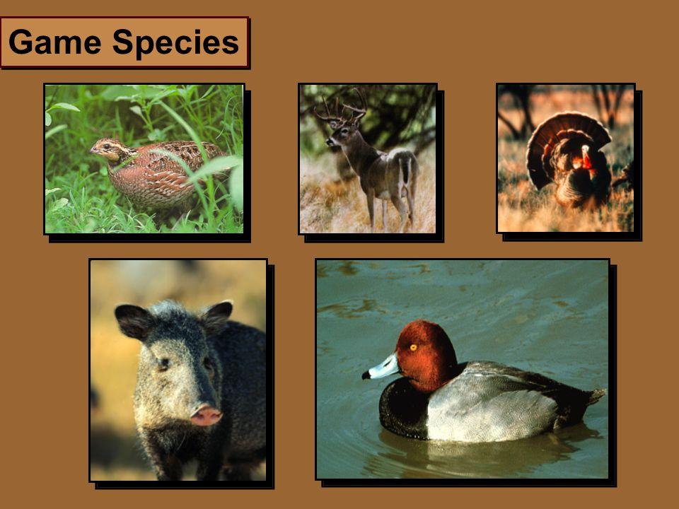 Game Species