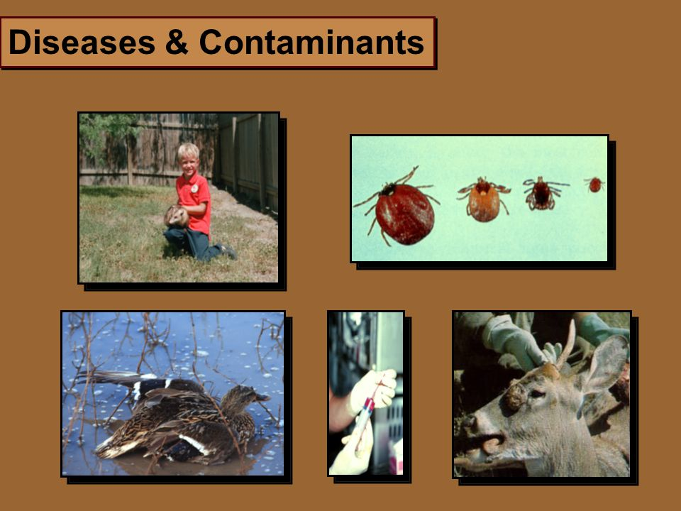 Diseases & Contaminants