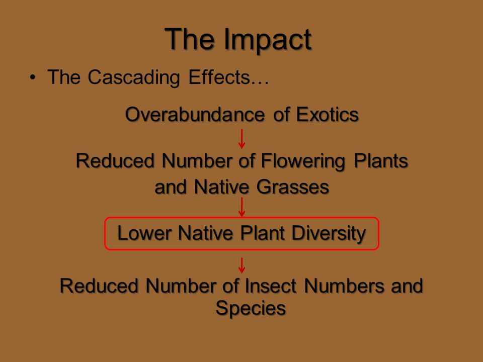 The Impact The Cascading Effects… Overabundance of Exotics Reduced Number of Flowering Plants and Native Grasses Lower Native Plant Diversity Reduced Number of Insect Numbers and Species