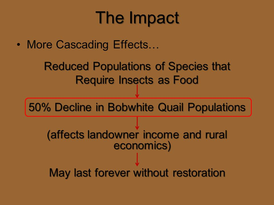 The Impact More Cascading Effects… Reduced Populations of Species that Require Insects as Food 50% Decline in Bobwhite Quail Populations (affects landowner income and rural economics) May last forever without restoration