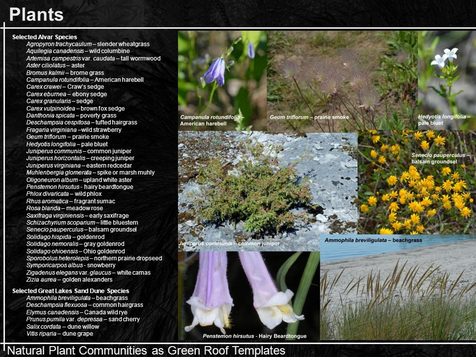 Natural Plant Communities as Green Roof Templates Color/Texture