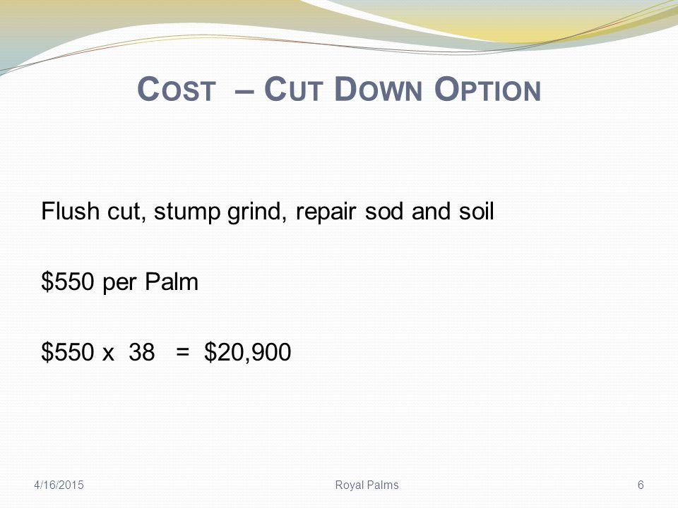 C OST – R ELOCATE O PTION Excavate root ball, transport, & transplant = $1,200 per Palm 38 X $1200 = $45,600 O'Donnell Landscaping estimates $7,000 to repair any curb or irrigation damage.