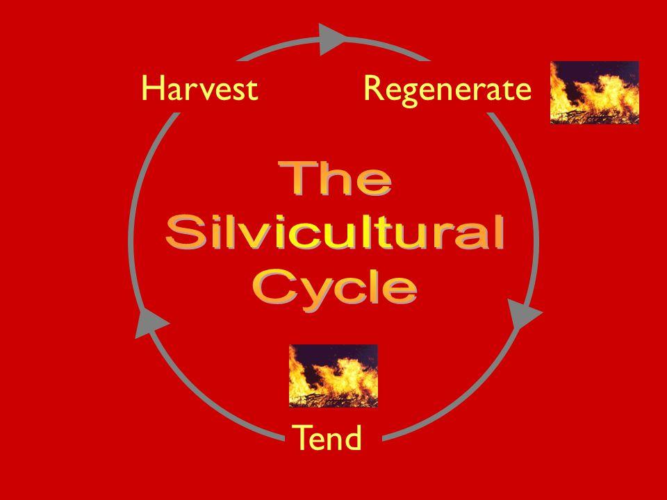 Tend RegenerateHarvest