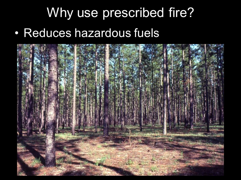 Why use prescribed fire Reduces hazardous fuels