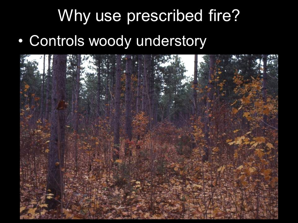 Why use prescribed fire? Controls woody understory