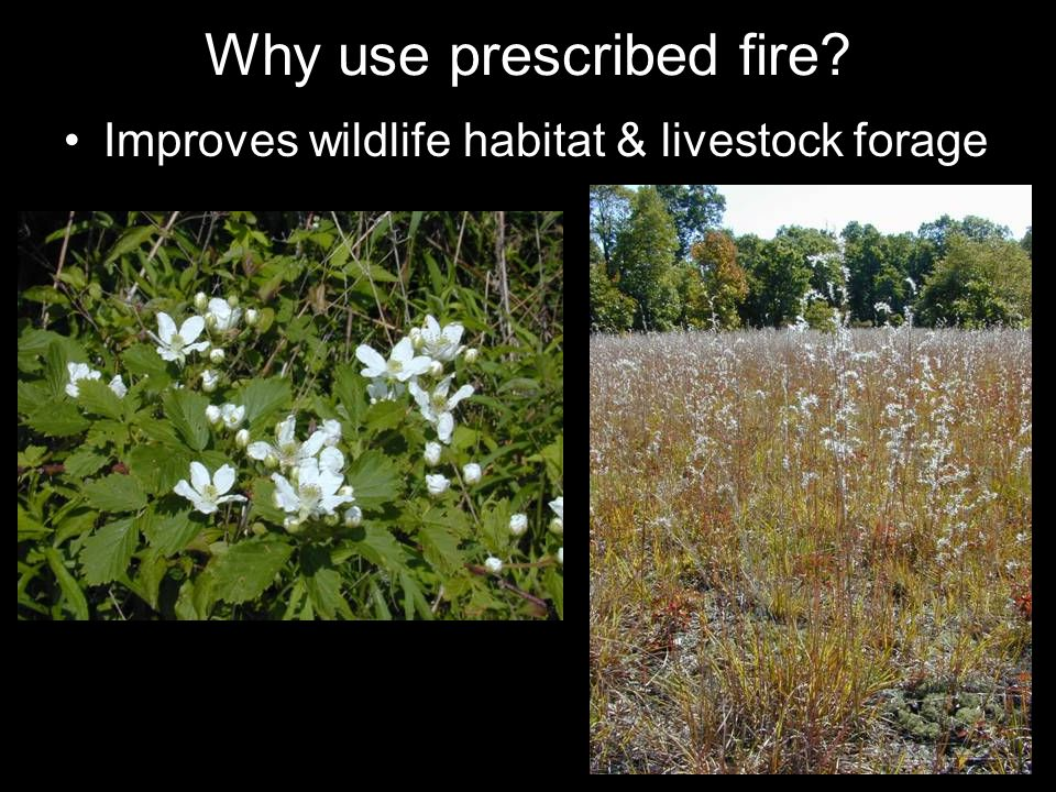 Why use prescribed fire Improves wildlife habitat & livestock forage