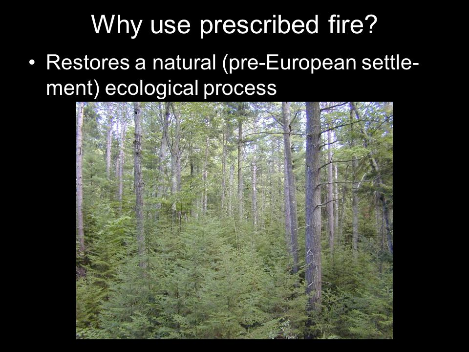 Why use prescribed fire? Restores a natural (pre-European settle- ment) ecological process