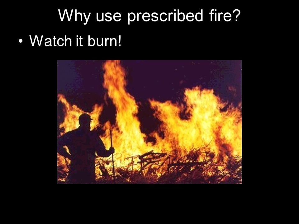 Why use prescribed fire? Watch it burn!