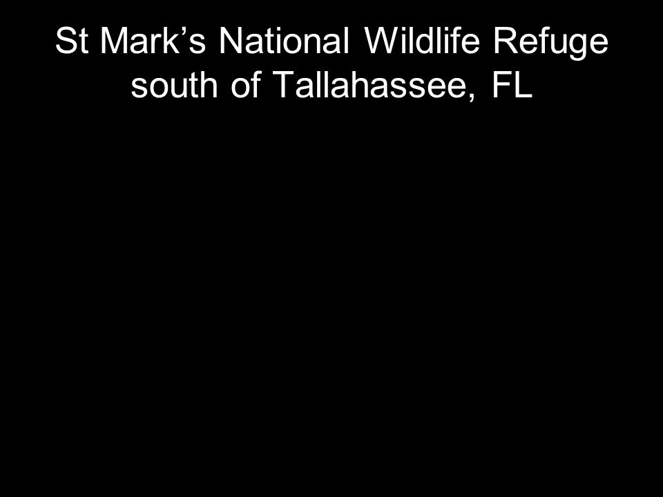 St Mark's National Wildlife Refuge south of Tallahassee, FL