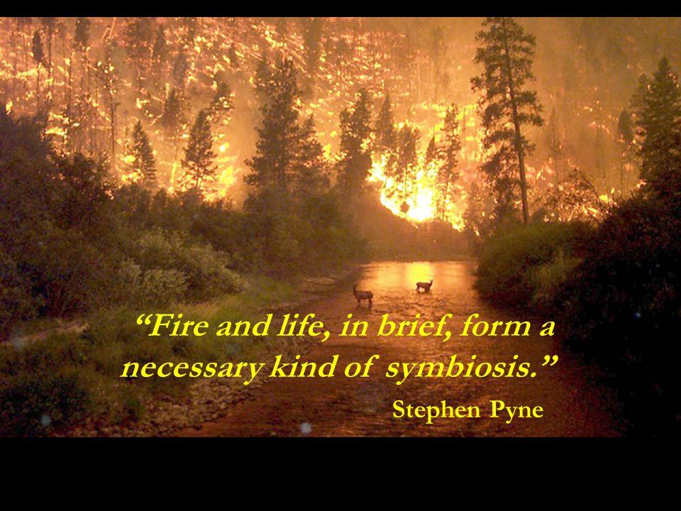 Fire and life, in brief, form a necessary kind of symbiosis. Stephen Pyne