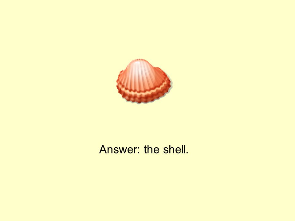 Answer: the shell.