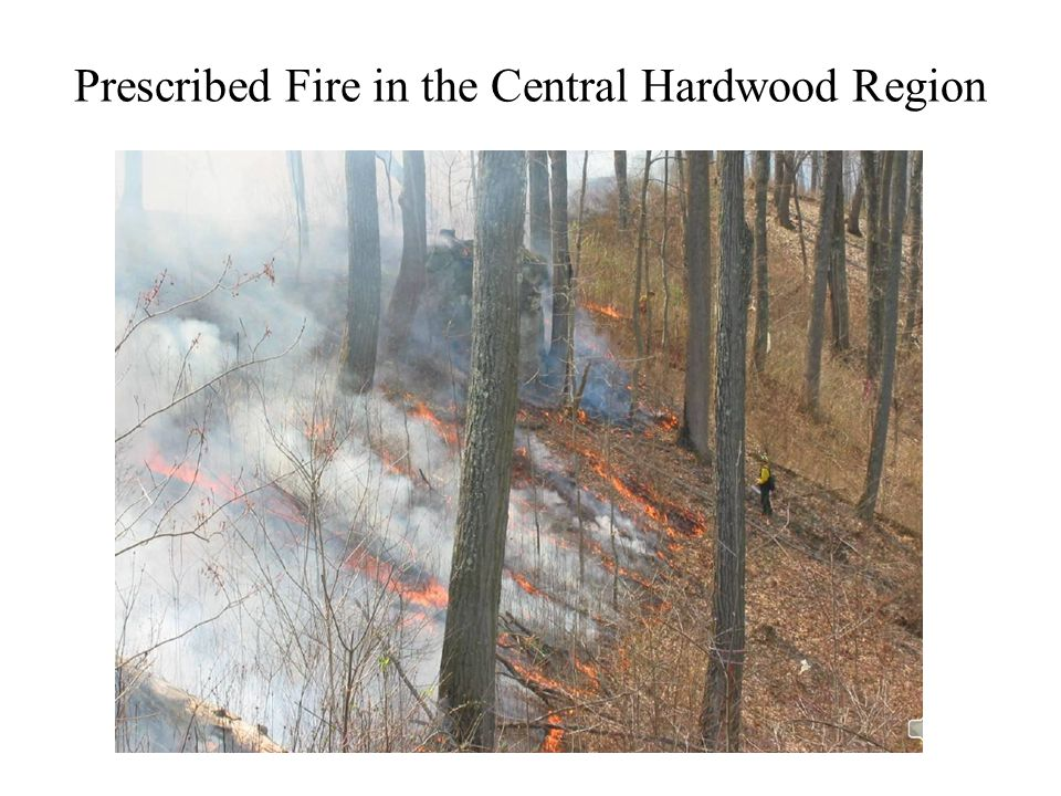 Prescribed Fire in the Central Hardwood Region