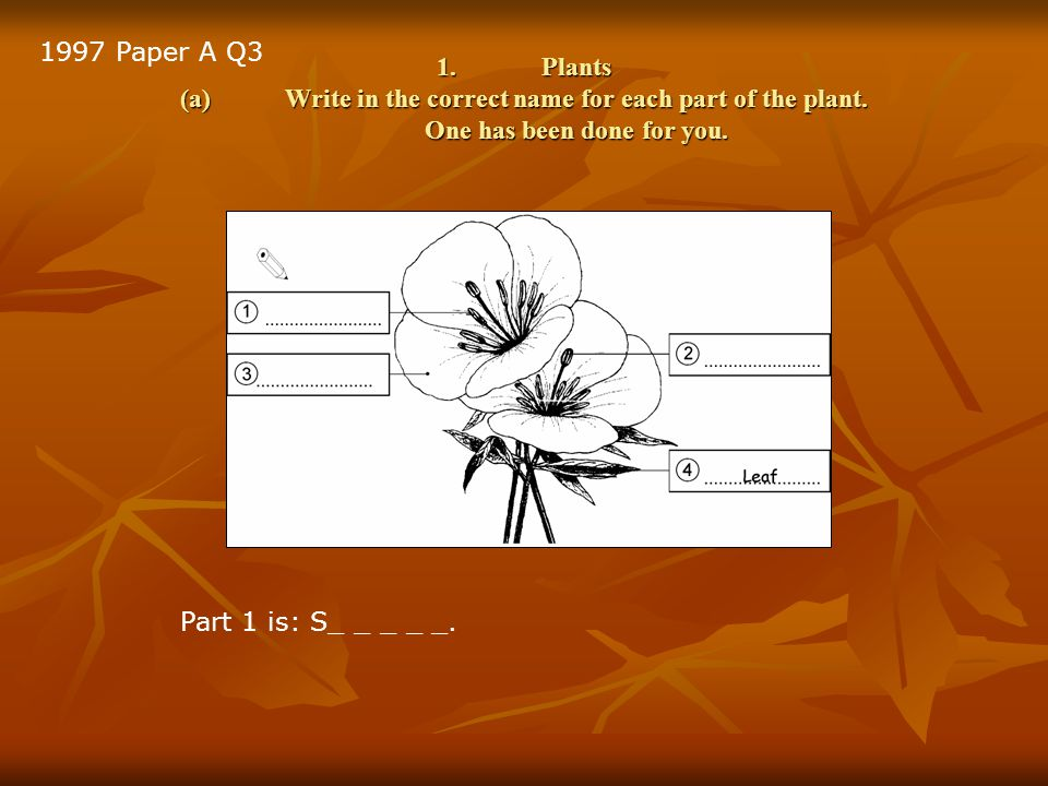 1.Plants (a)Write in the correct name for each part of the plant.