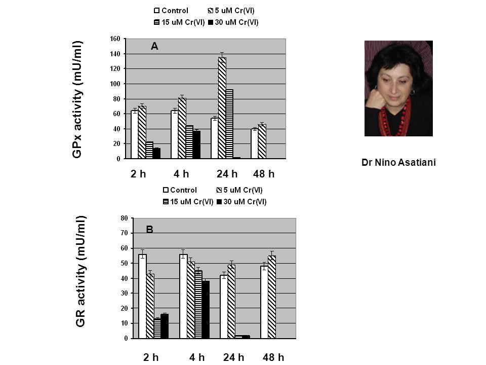GPx activity (mU/ml) GR activity (mU/ml) 2 h 4 h 24 h 48 h A B Dr Nino Asatiani