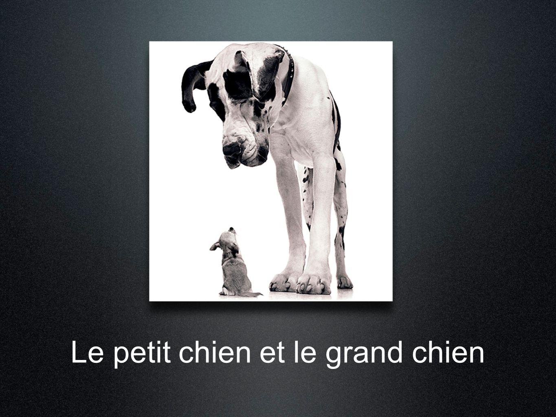Le petit chien et le grand chien